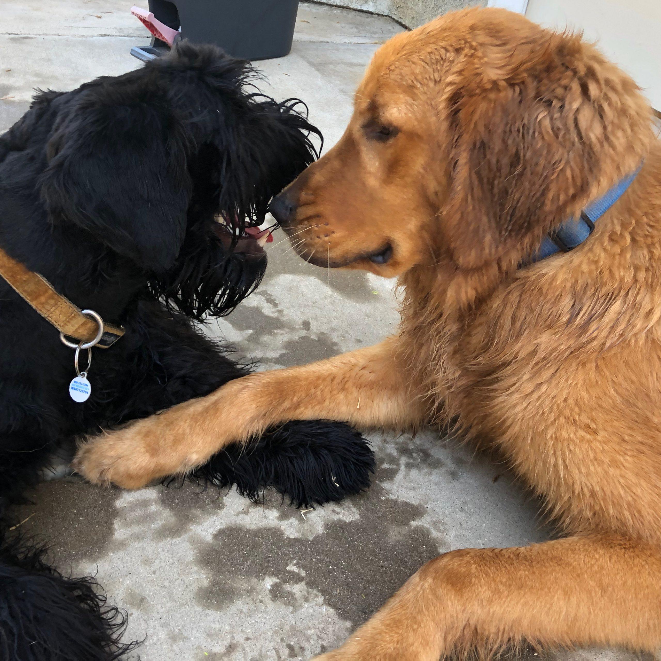 Grrr, Dog Fights